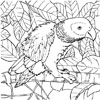 Parrot coloring picture